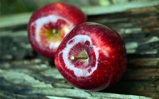 Польза и вред яблока для организма человека